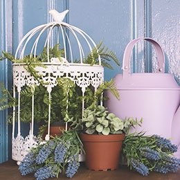 Bird & Plant Cages