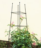 Plant Supports and Garden Obelisks
