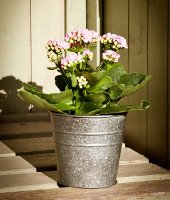 Contemporary Planters and Plant Pots