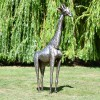 Recycled Metal Giraffe Sculpture in the Height of 4ft
