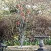 Red Toadstool Sculpture in Situ in the Garden