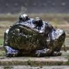 Antique Bronze Bull Frog Sculpture