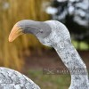 Close-up of the Head of the White Flamingo