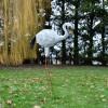 """""""Jabberwocky"""" Flamingo in Situ in the Garden"""