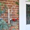 'Turenne' Hanging Basket Bracket in Situ Next to the Front Door