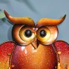 Close-up of the Eyes of the Owl