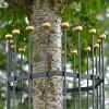 Close Up of Heavy Duty Iron Tree Guard