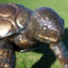 Close-up of the Detail on the Tortoise's Face