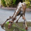 'Serengeti' Drinking Giraffe Garden Sculpture