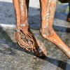 Close up of giraffe hocks and bushy tail