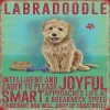 Labradoodle Metal Sign
