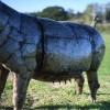 Side View OF The Recycled Metal Pig