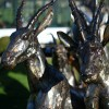 Antelope Sculpture Created From Recycled Metal