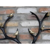 Close-up of the Gold Birds Sitting on the Stag's Antlers