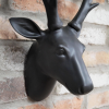 Close-up of the Stag's Head