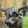 Close up of Highland Cow face and horns