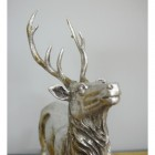 Close up of stag head