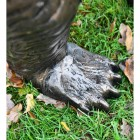 Close-up of the Antique Bronze Feet on the Bear Cub