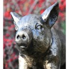 Close-up of the Face of the Black & Gold Piglet Garden Sculpture