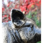 Ears on the Head of the Black & Gold Piglet Garden Sculpture