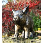View of the Front of the Black & Gold Piglet Garden Sculpture