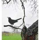 Blackbird Tree Spike in Tree