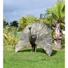 Bronze Finish Peacock Sculpture with Open Tail in Situ in the Garden