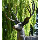 Close Up Of Stag Garden Sculpture
