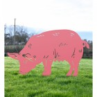 Silhouette of Pink Female Pig