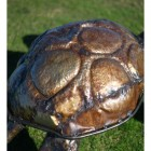 Tortoise Shell Created From Recycled Metal