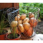 """Grannies Orchard"" Three Sizes Fruit and Vegetable Baskets"