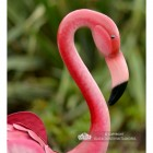 Side View of the Head of the Flamingo Sculpture