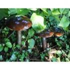 """""""Buckfast Falls"""" Toadstools Garden Sculpture"""