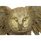Owl With Outstretched Wings Wall Art & Bust Close-Up