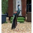 Tall Peacock Sculpture in Situ