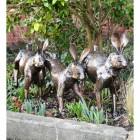 Running Rabbit Sculpture in Situ in the Garden