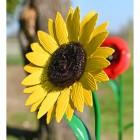 beautiful yellow sunflower head sculpture for garden