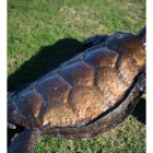 Detail On The Turtles Shell