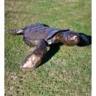 Turtle Garden Sculpture Created From Recycled Metal