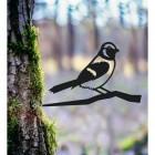 Sparrow Tree Spike in Situ