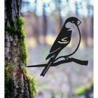 Bullfinch Spike in the Woodlands
