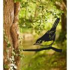 Cettis Warblere Tree Spike in Situ