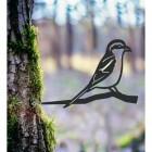 Great Grey Shrike Spike in the Woodlands