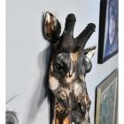Side view of Giraffe head