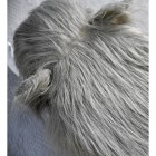Birdseye of Wilma the Woolly Mammoth Foot Stool