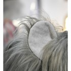 Close up of Wilma the Woolly Mammoth Ears