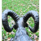 Rear view of Ram's horns