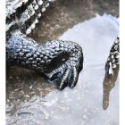 Close up of highly detailed feet on alligator