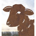 Close up of young curly lamb silhouette