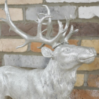 Close up of Stag's head and antlers